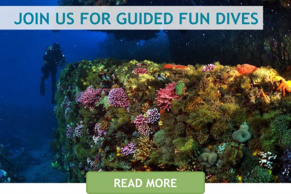 home content fundive1
