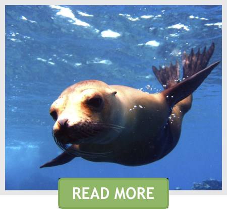 fun dive seal snorkel