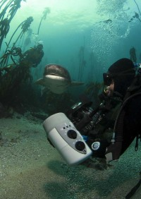 scuba dive with cow sharks036