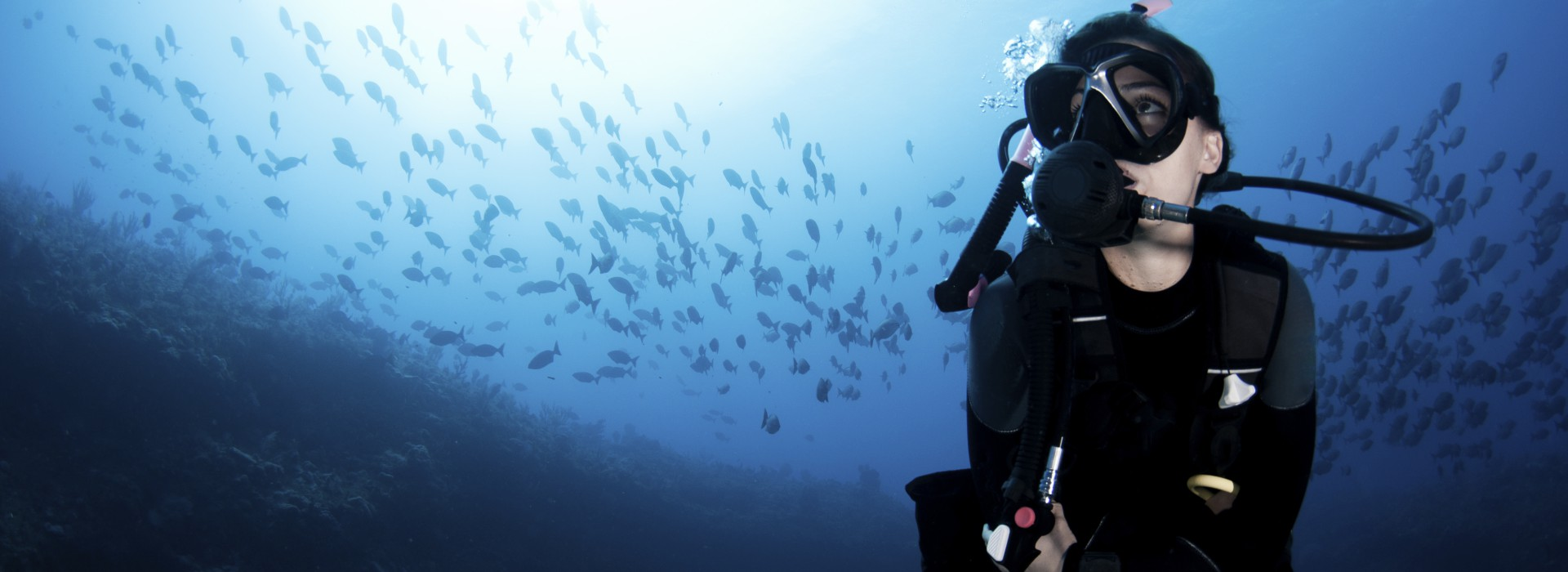 Open Water Diver Course Scuba Dive Courses Cape Town